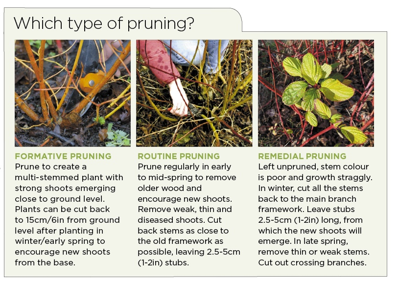Which type of pruning_.jpg