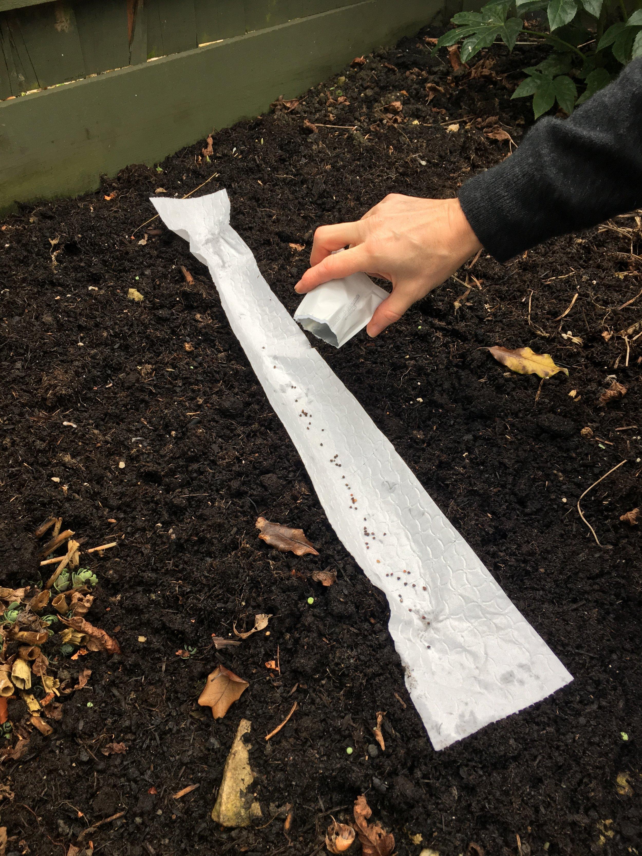 6. Toilet roll seed tape.JPG