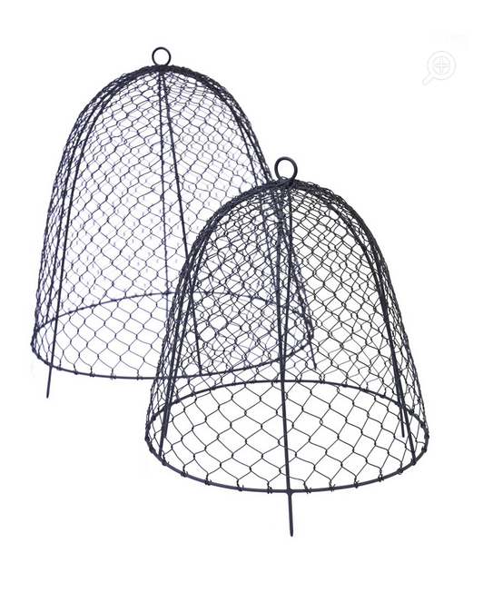 Squirrel proof cloches from Crocus