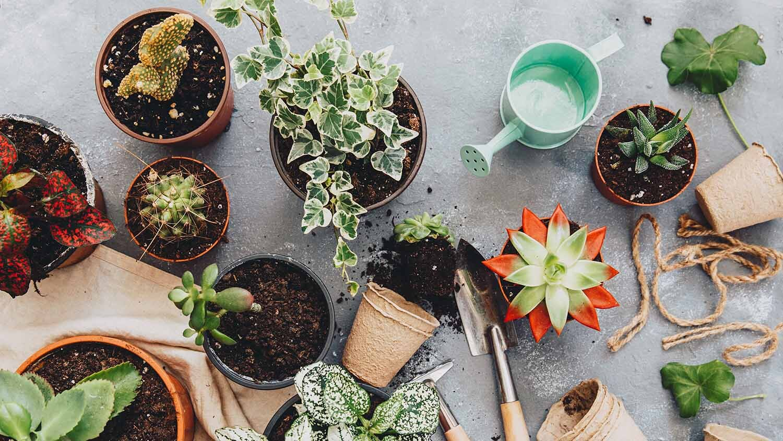 gifts_for_gardeners.jpg