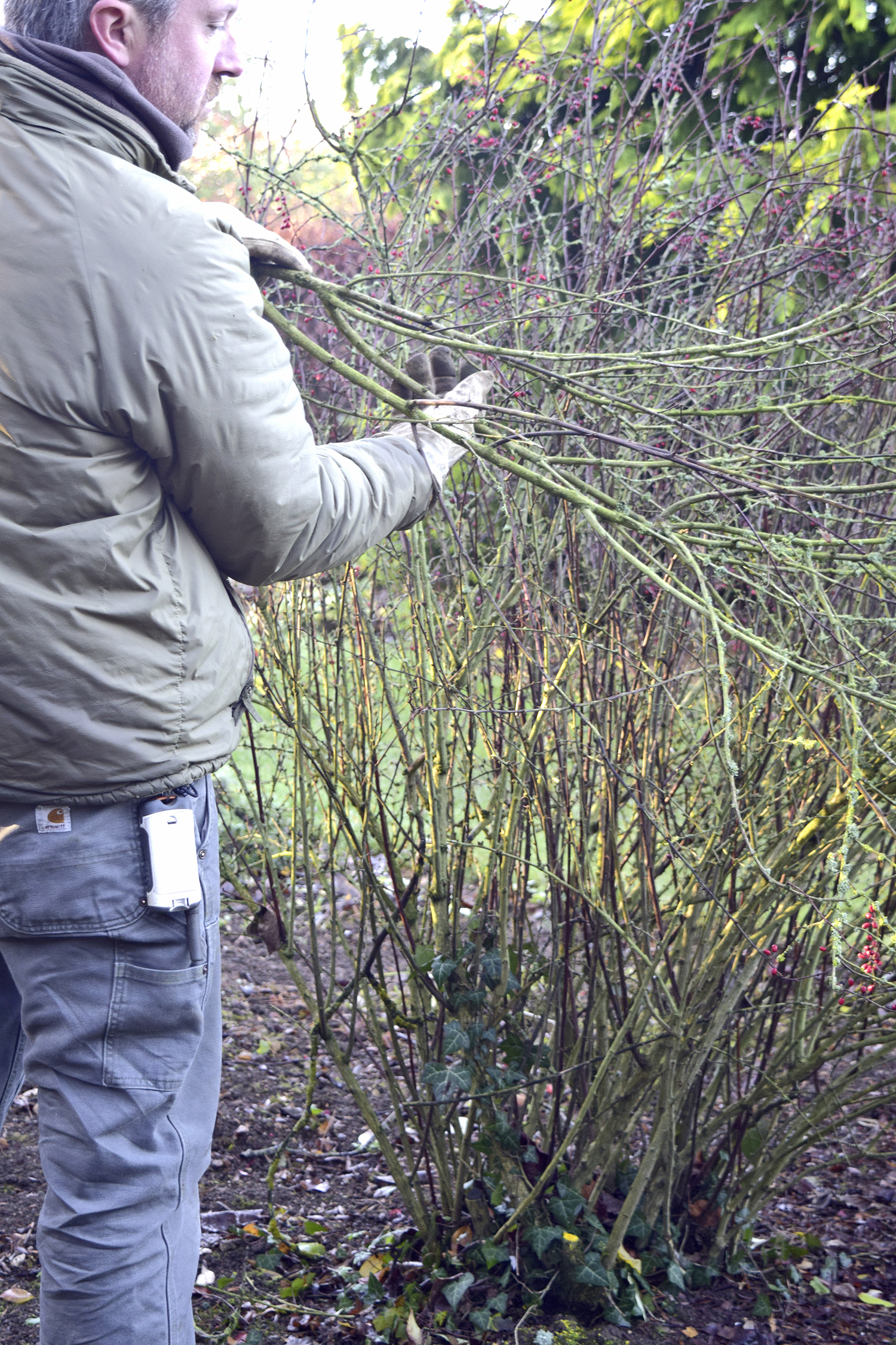 5. Remove lax branches