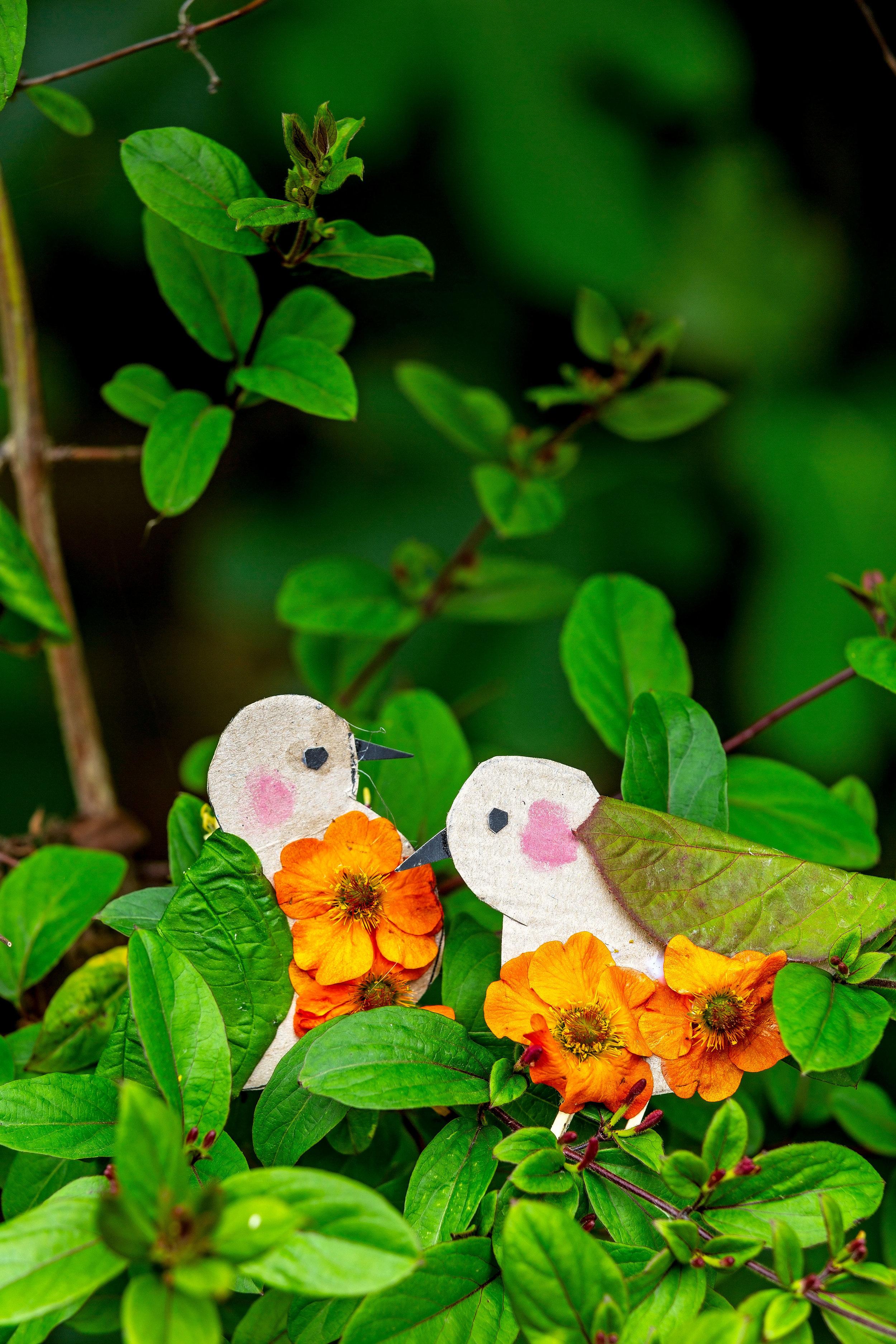 Craft project garden birds LandScape magazine