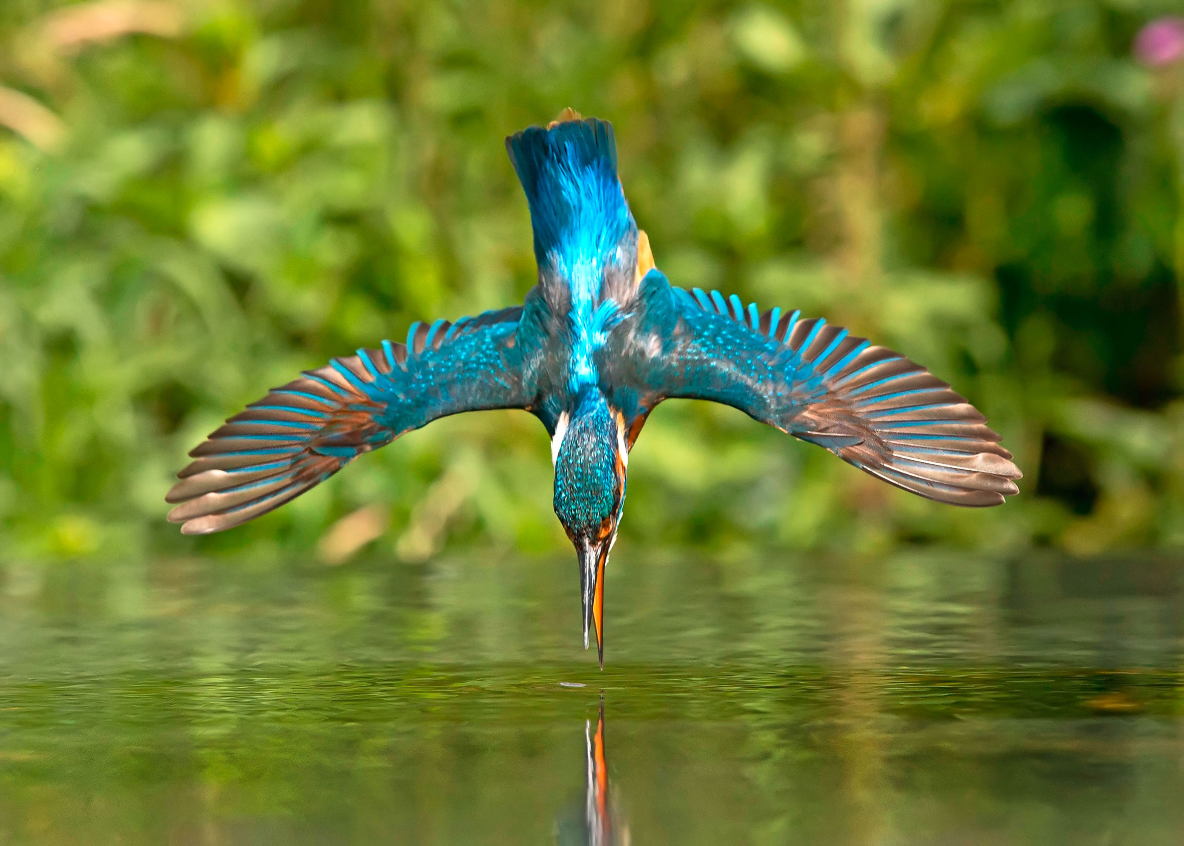 LandScape-magazine-Alamy-Jerome Murray-kingfisher.jpg