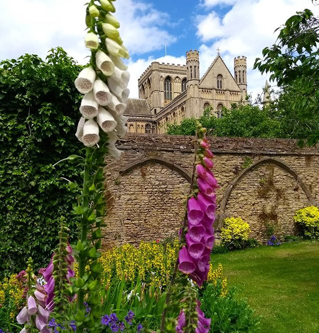 Foxgloves reaching for the clouds... #today #foxglove #garden #june #juneflowers #cathedral #peterboroughcathedral #heritage #heritagefestival #history #cambridgeshire #walledgarden #landscapemag #landscapemagazine
