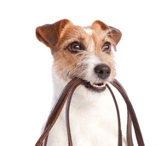 OUR DOG WALKING SERVICE