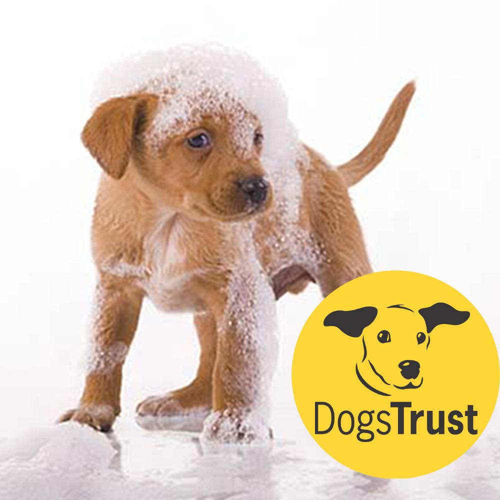 puppy-grooming-pix.jpg
