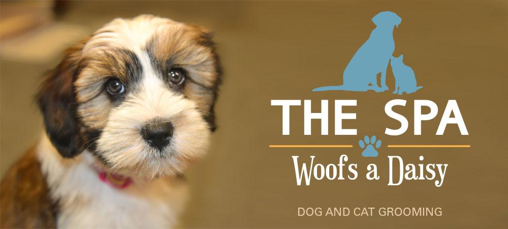 Pet-Spa-Woofs-a-Daisy.jpg