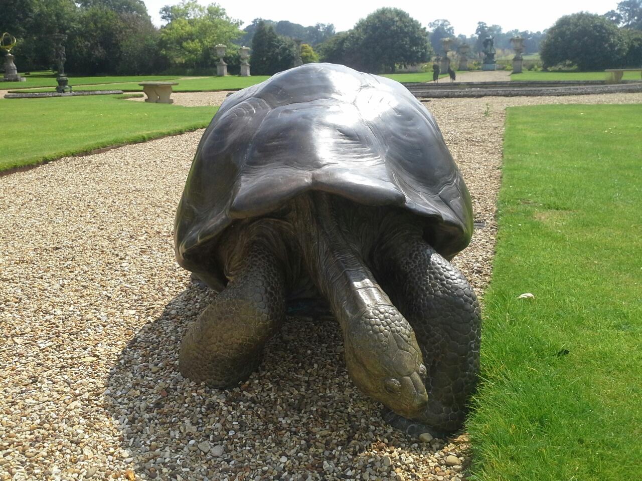 Tortoise-I-b.jpg