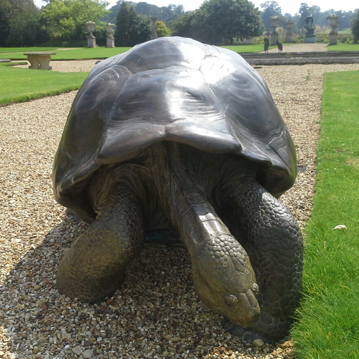 Galapagos Tortoise - one of a pair of recently commissioned bronze sculptures.