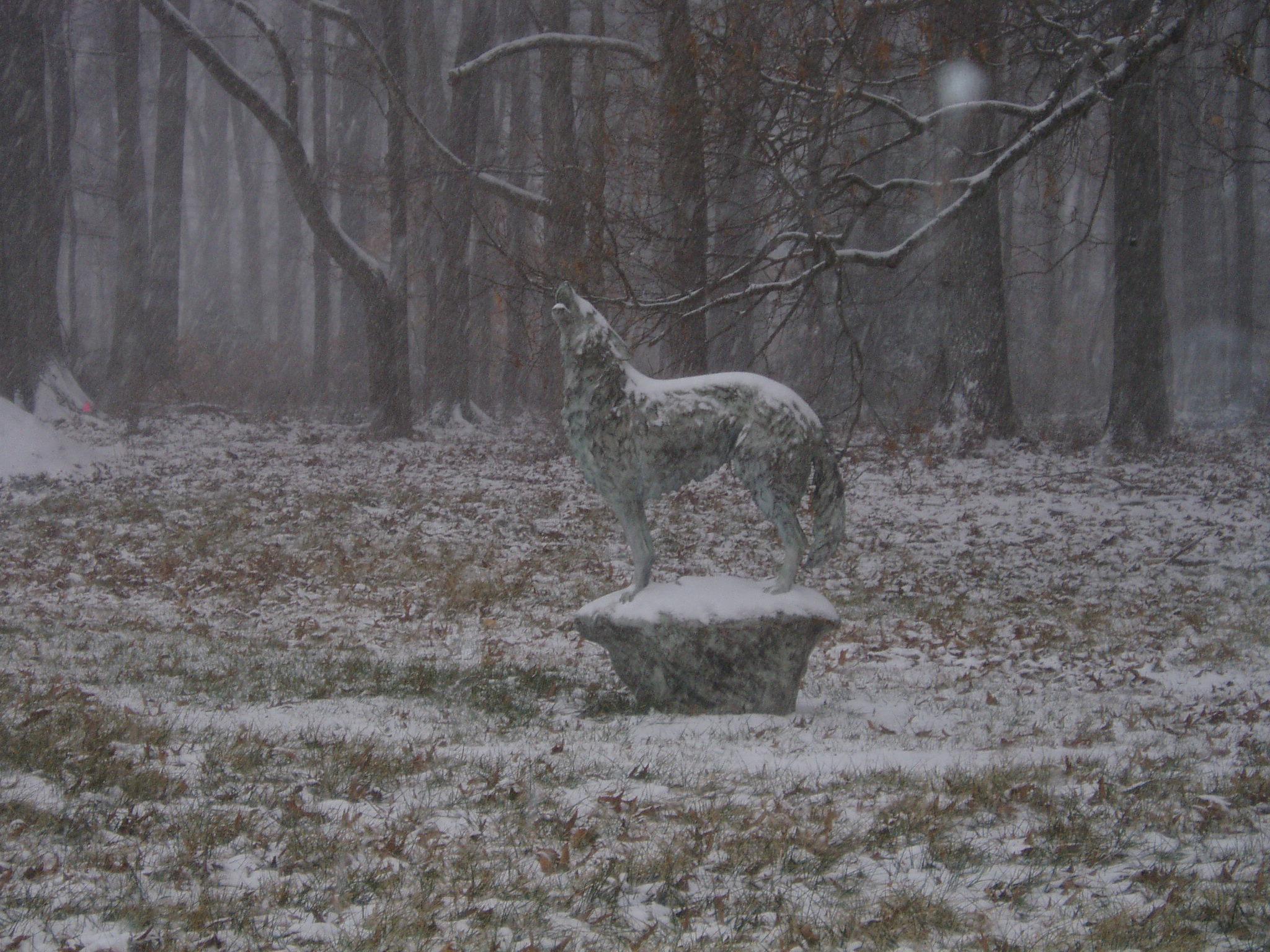 winter  WOLF 2005 012.jpg