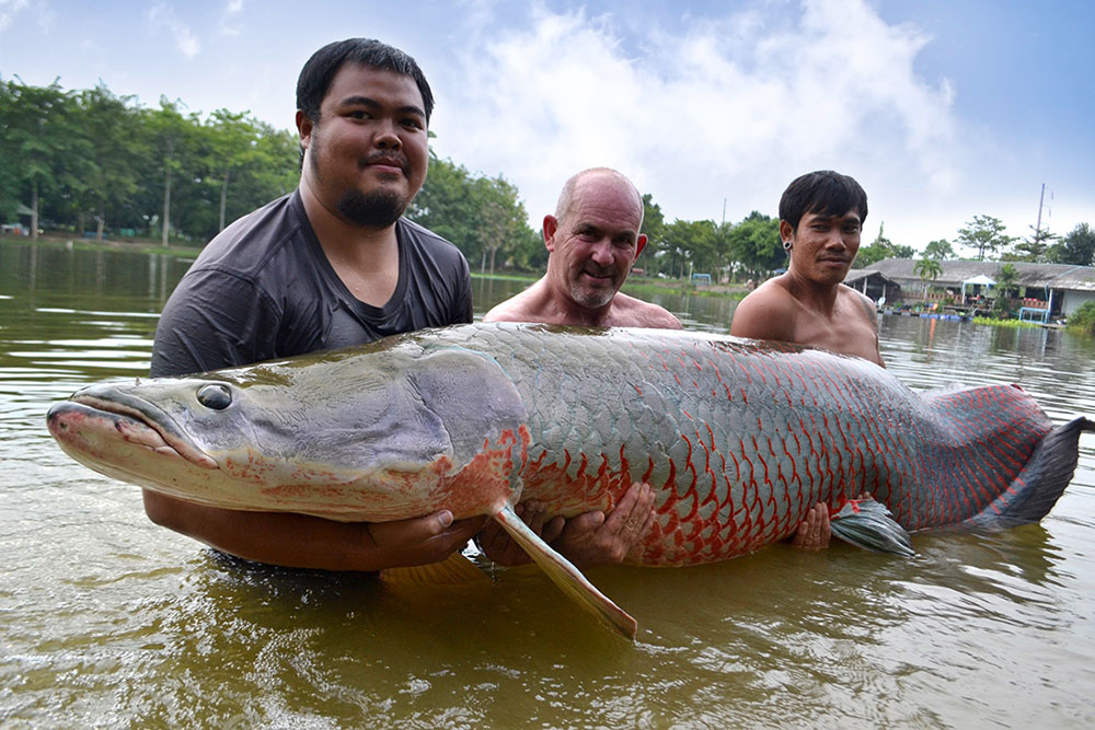 Andy (centre) and his 450lb arapaima.