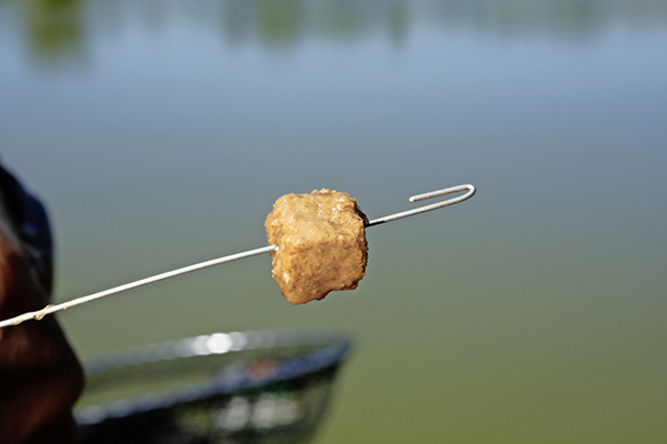 Catmeat is usually smells awful to us, but fish love it. Grab a chunk and push a bairting needle right through the middle and out the other side