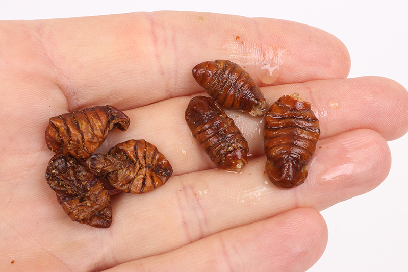 4. silkworm 2 - dry and soaked baits.jpg