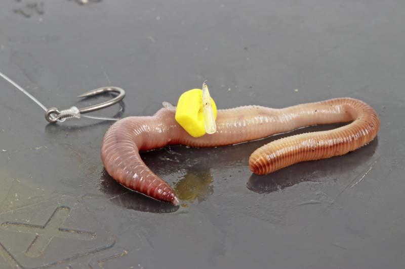worm.jpg