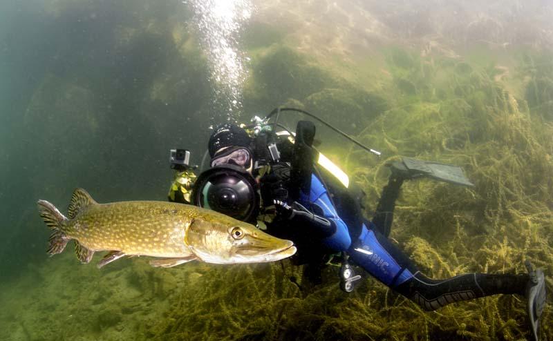 Jack_Perks underwater with pike main.jpg