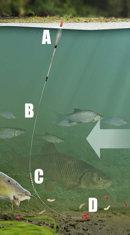 Chub big top and bottom float river rig.jpg