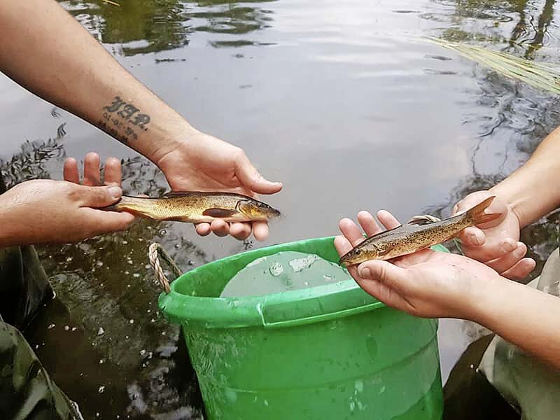180 barbel between 1lb and 2lb were stocked_1.jpg