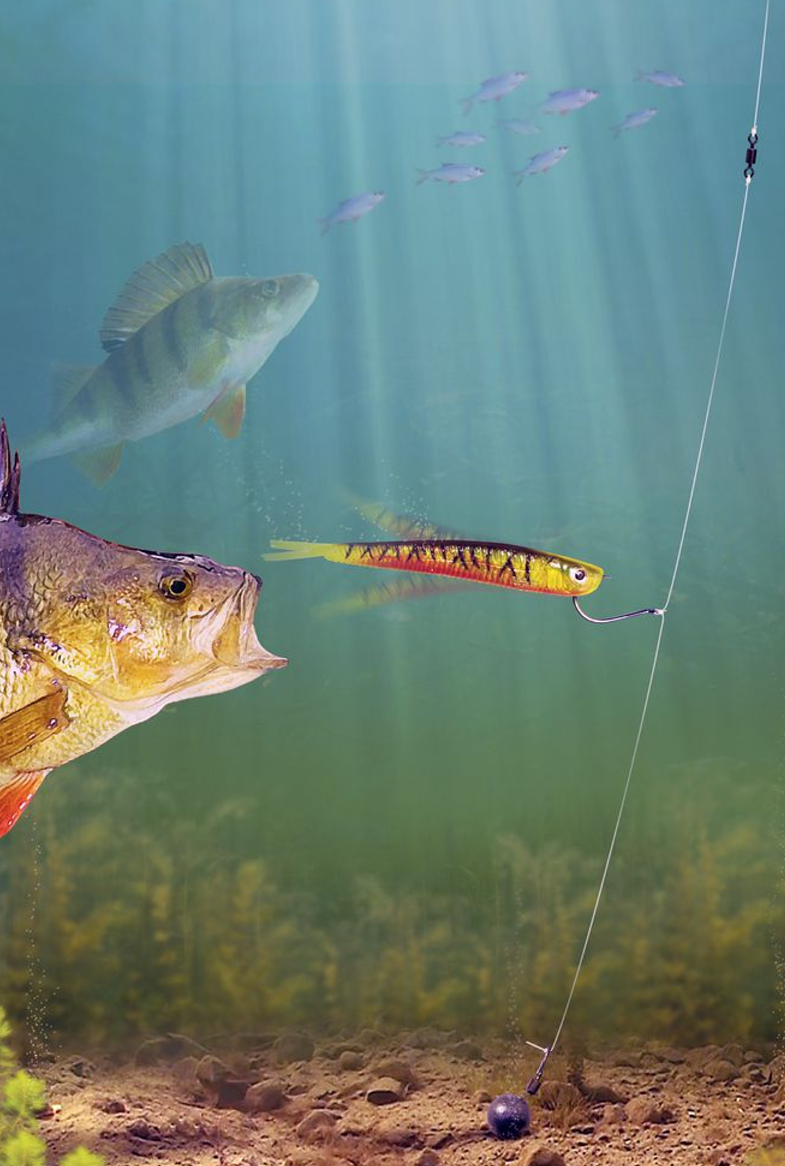 Pre tied drop shot rig with HI-VIS LEADS Pike Chub fishing Zander Perch
