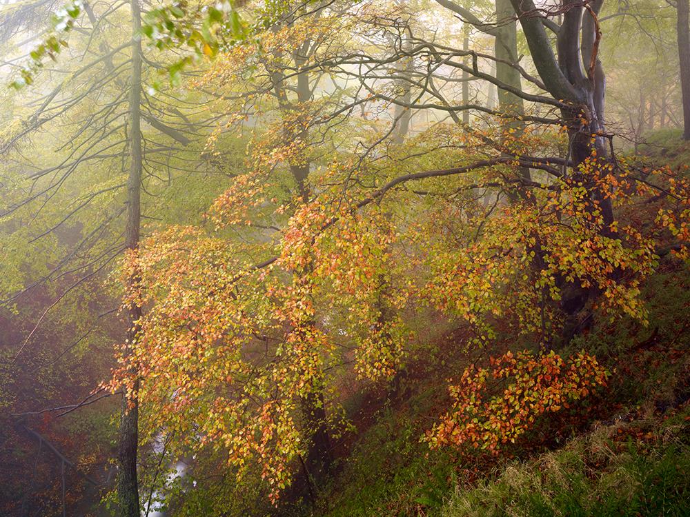 Height of autumn, SettleUSmaster copy.jpg