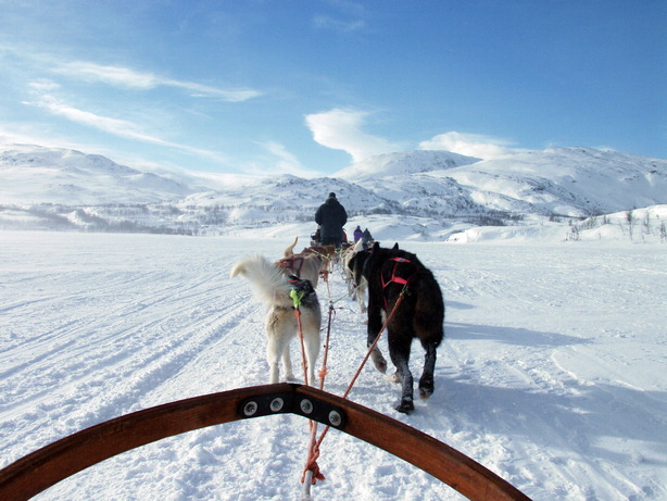 Winter%20Sweden%20provides%20a%20lot%20of%20winter%20activities%20with%20animals,%20from%20dog%20sledding%20to%20walking%20with%20reindeers,%20by%20Wolfgang%20Greiner.JPG