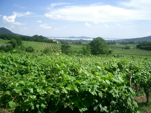 Great%20walking%20and%20wine%20tasting%20opportunties%20at%20Balaton.JPG