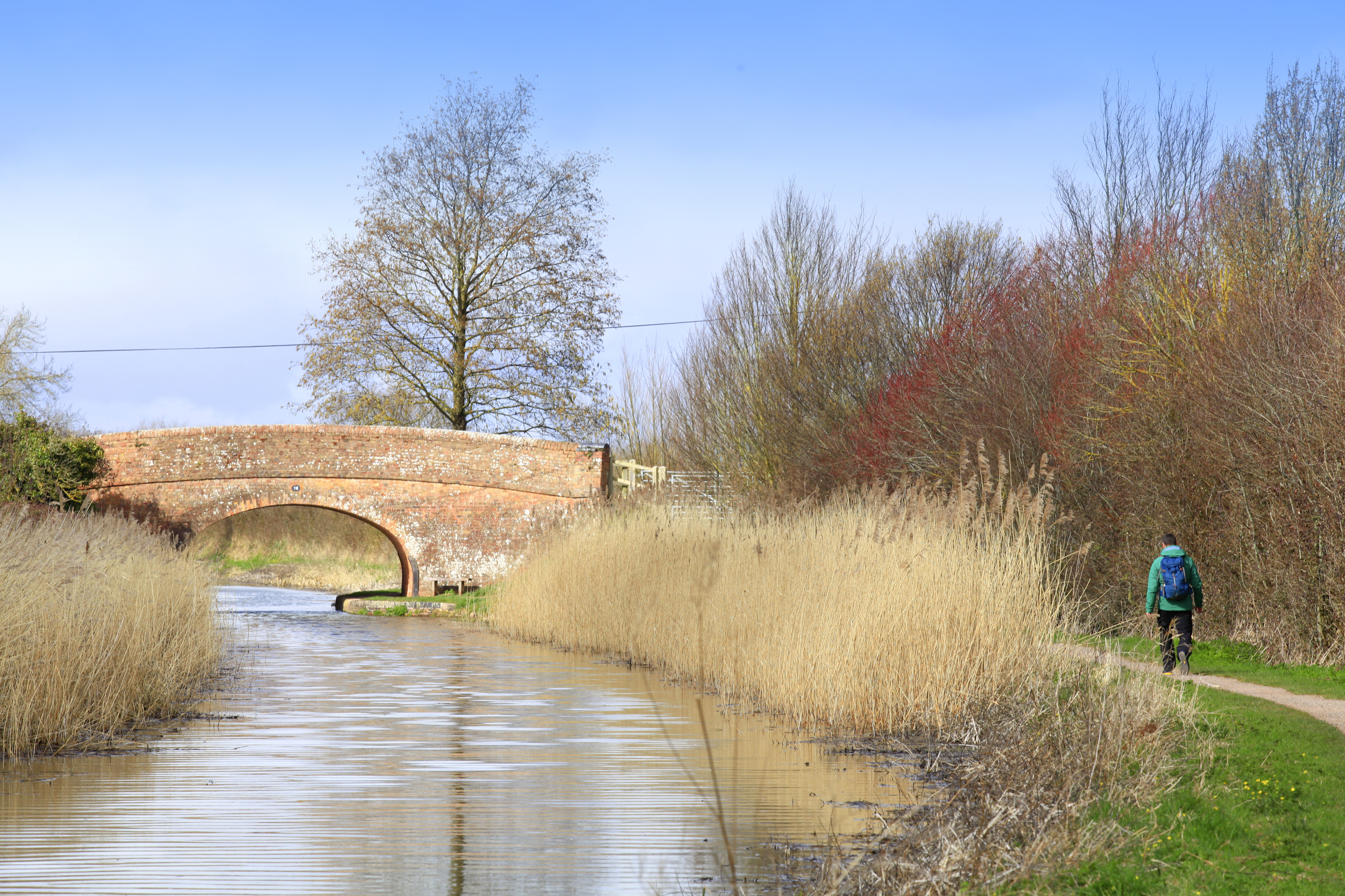 Reeds on the Taunton to Bridgewater Canal.  Photo : Tom Bailey © Country Walking