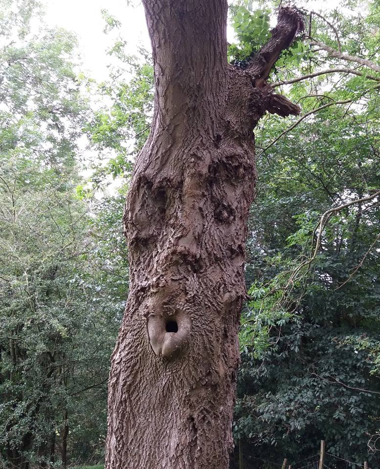 'Oooh, strapless top in THIS weather? It's not Palm Beach love!' Chris Thorn was appalled by this tree's catty attitude.