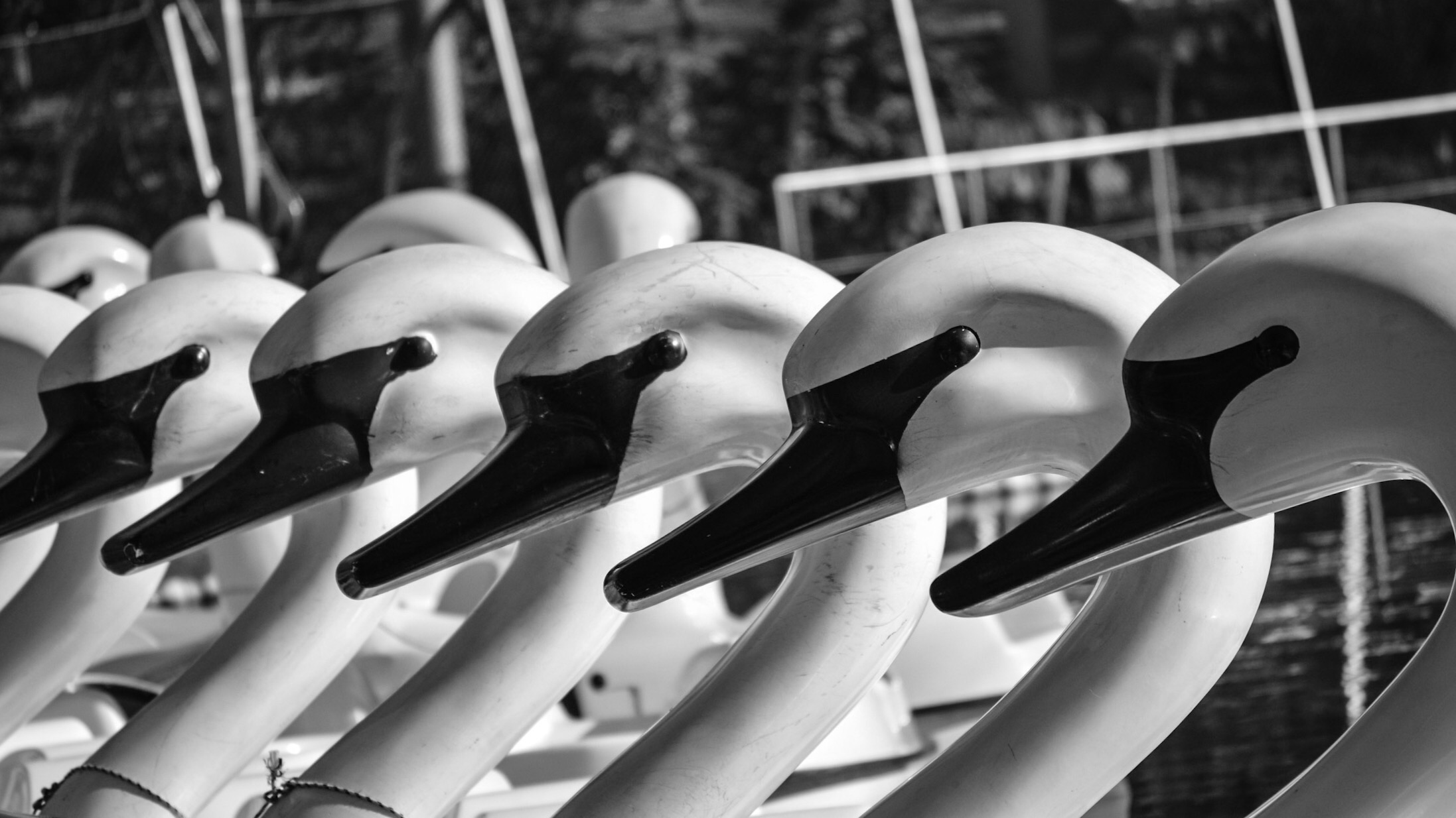 Swan boats waiting to be rented on the zoo's lake