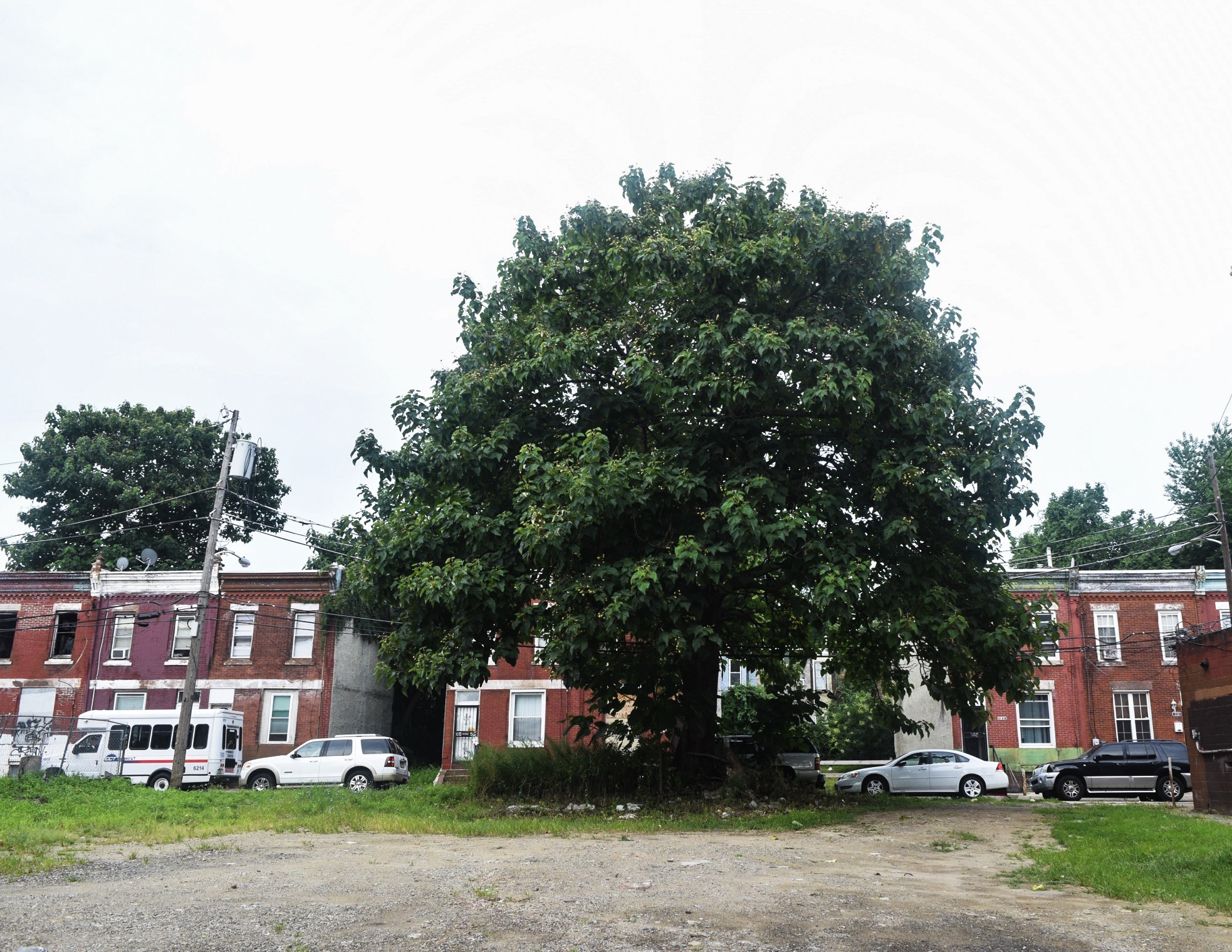 A tree grows in Philly
