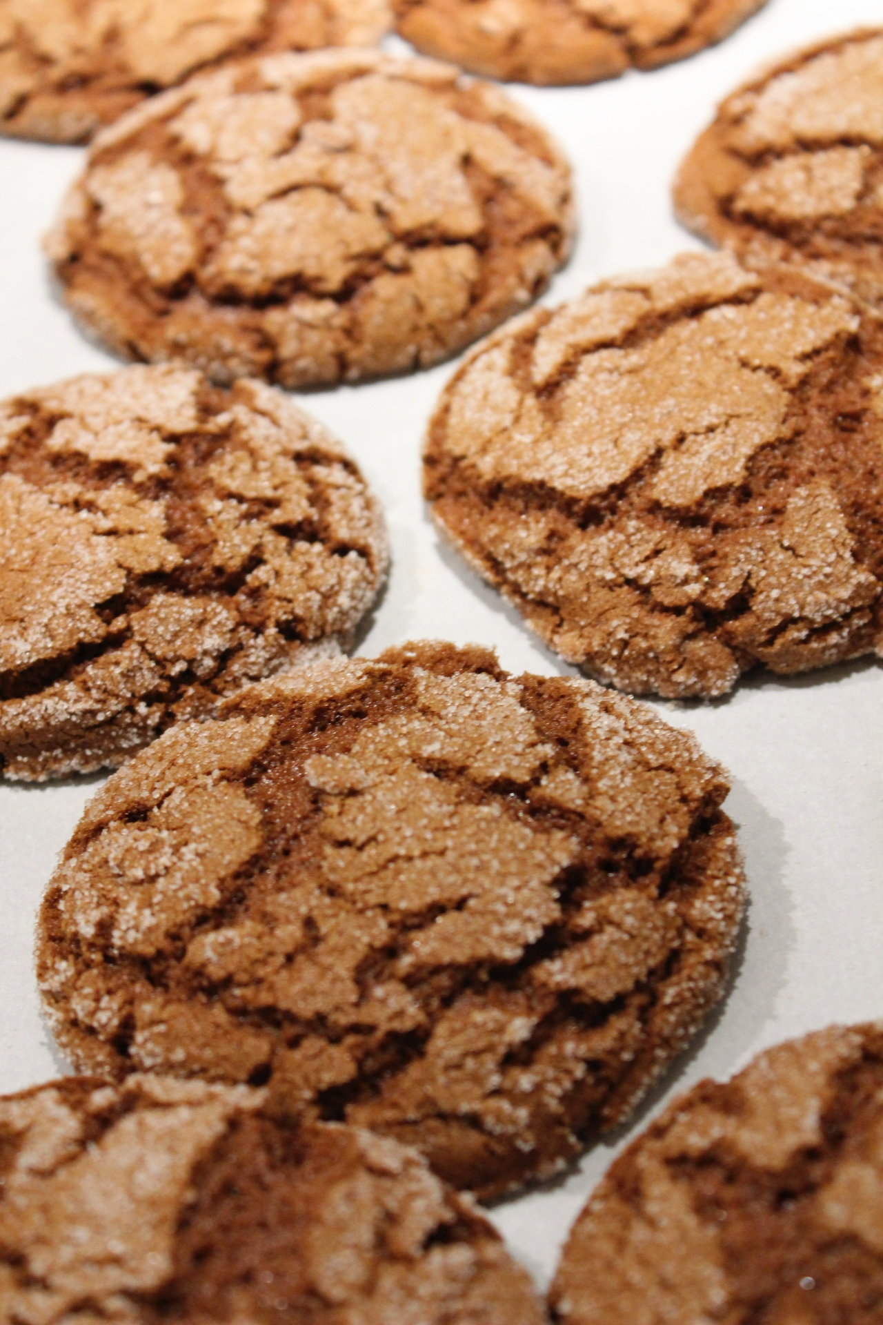 Ginger Snaps Pic