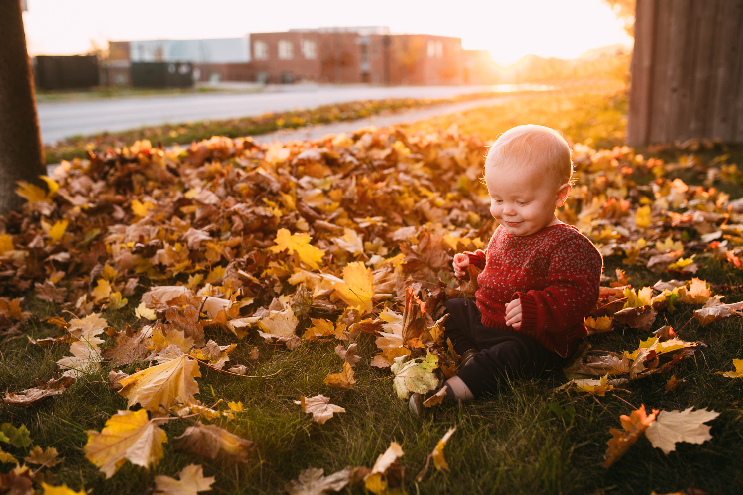 1 year old baby boy wearing red sweater sitting in pile of fall leaves at sunset - Markham child photos