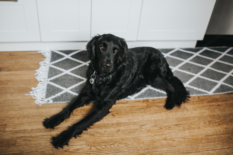 black family dog {Toronto Family Photographer}