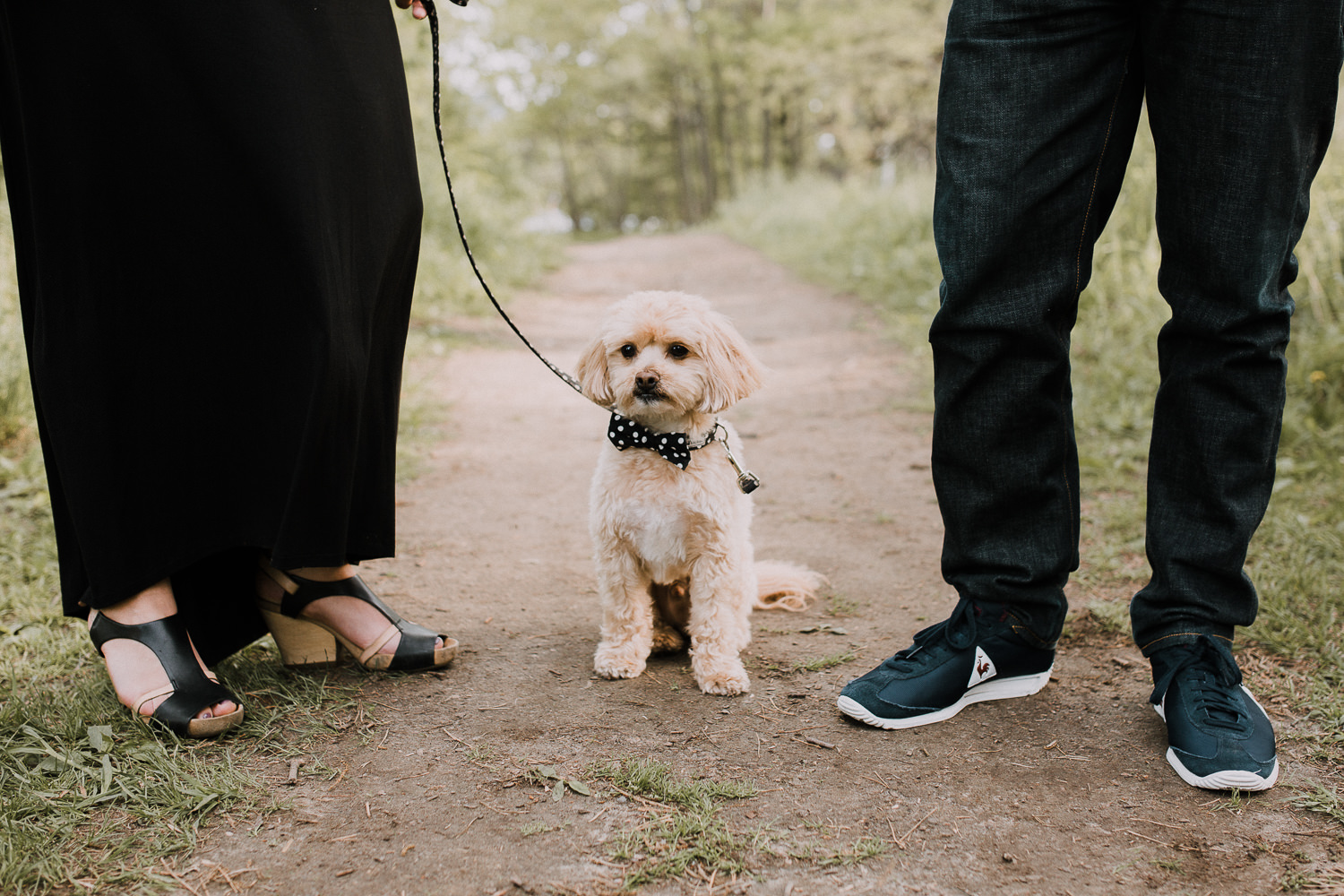 small golden brown shi-poo sitting while owners stand on either side -  Barrie Lifestyle Photography