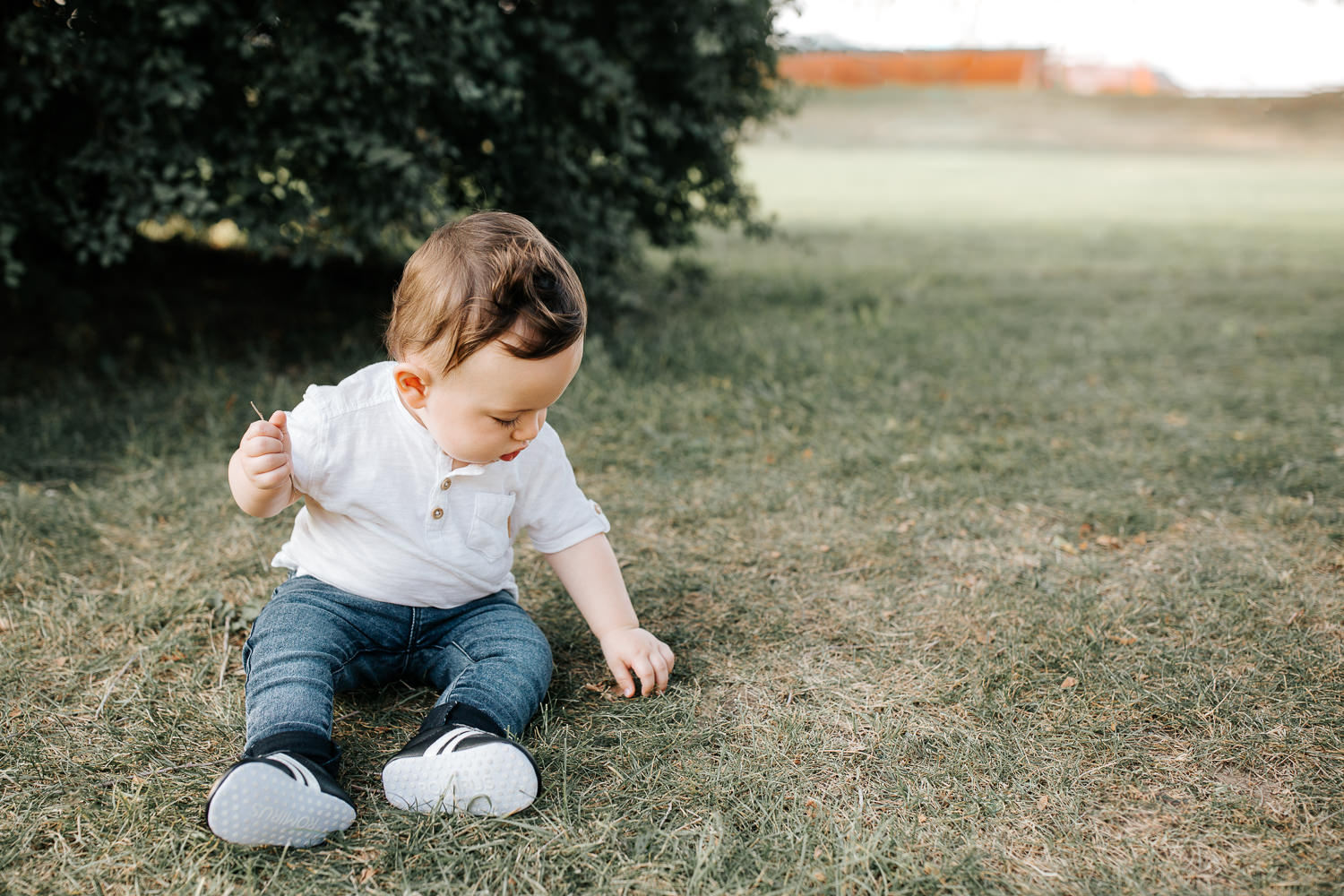 9 month old baby boy wearing white t-shirt, jeans and sneakers sitting on grass at park in front of greenery playing with leaves, looking down - Barrie Golden Hour Photos