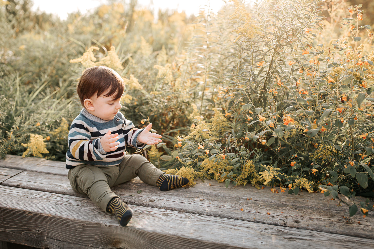 1 year old baby boy with brown hair wearing striped sweater sitting on wooden bench in front of yellow flowers, hands outstretched, setting sun behind him - Newmarket Golden Hour Photography