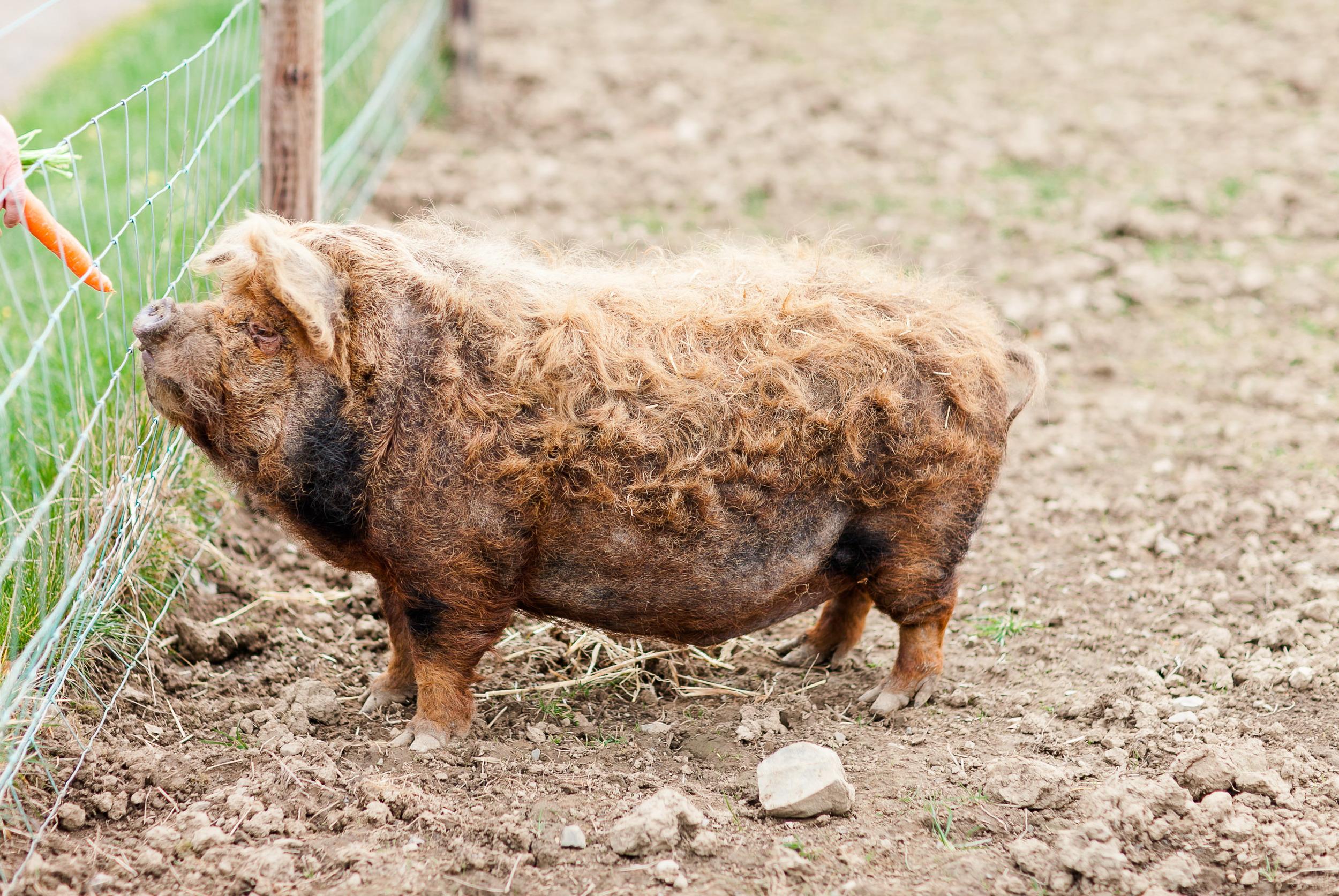 Animal Farm-0005.jpg