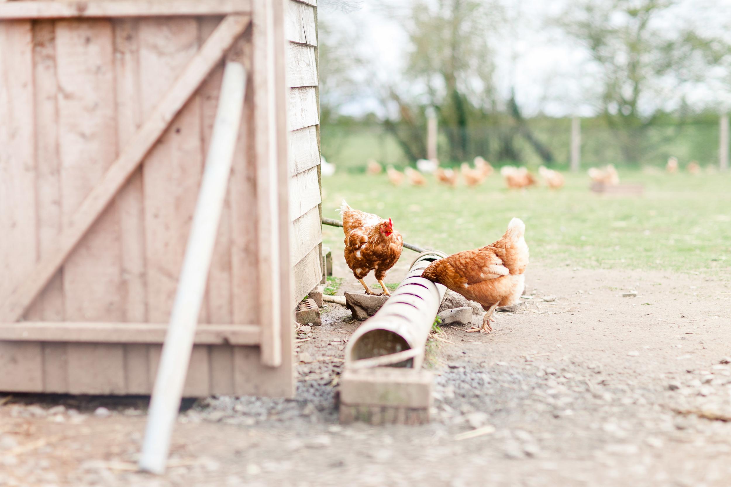 Animal Farm-0010.jpg
