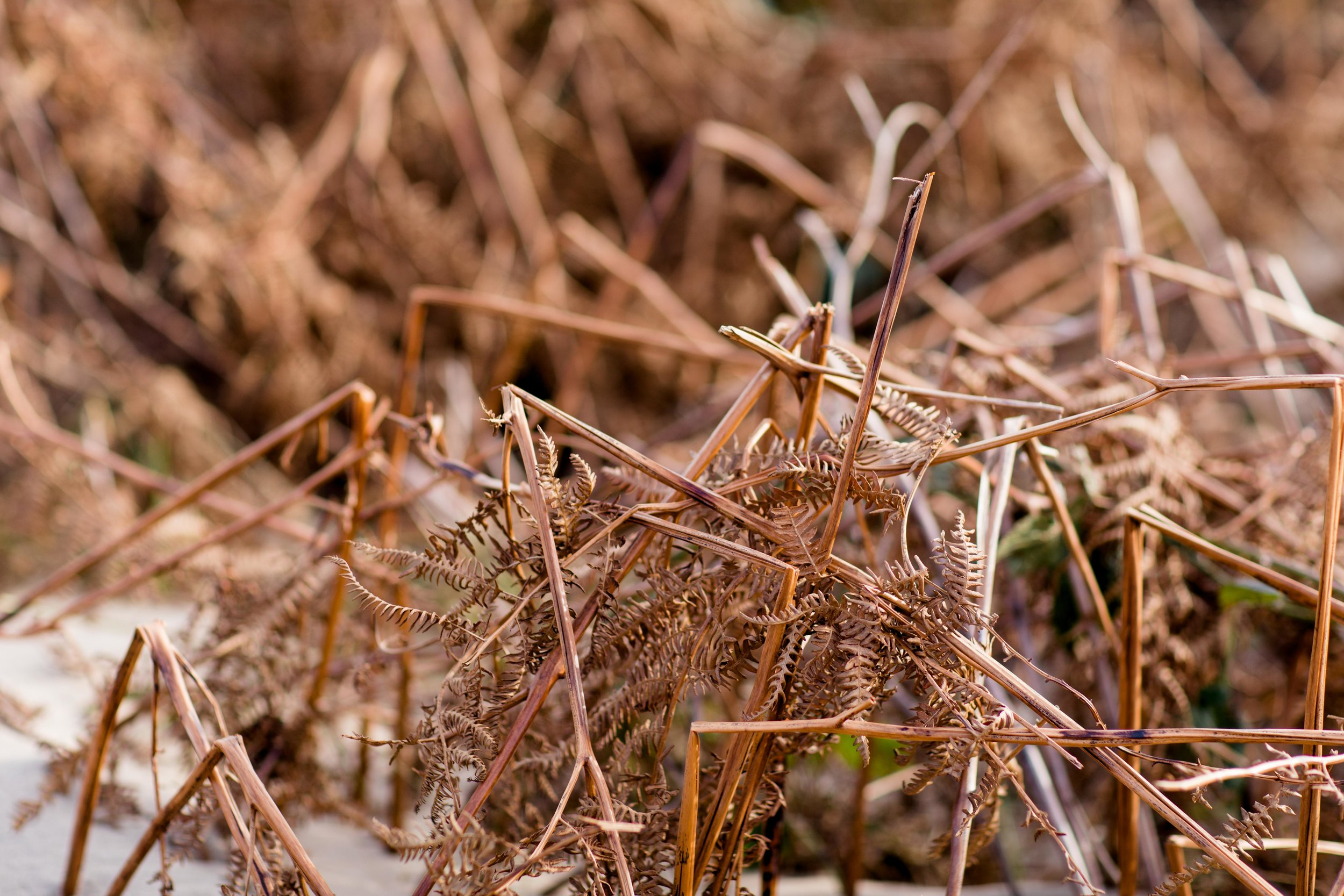 dry grass on a beach during winter time in ireland on brittas bay