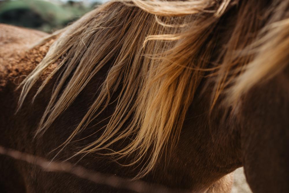 HOP-Horses-March-31.jpg