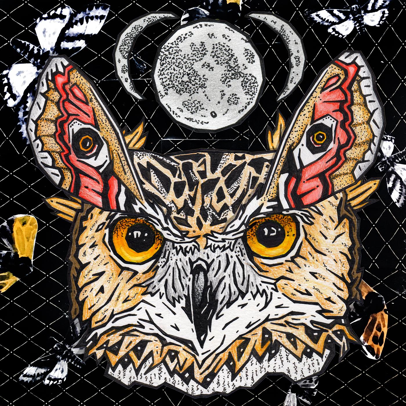 dna owl(1).jpeg