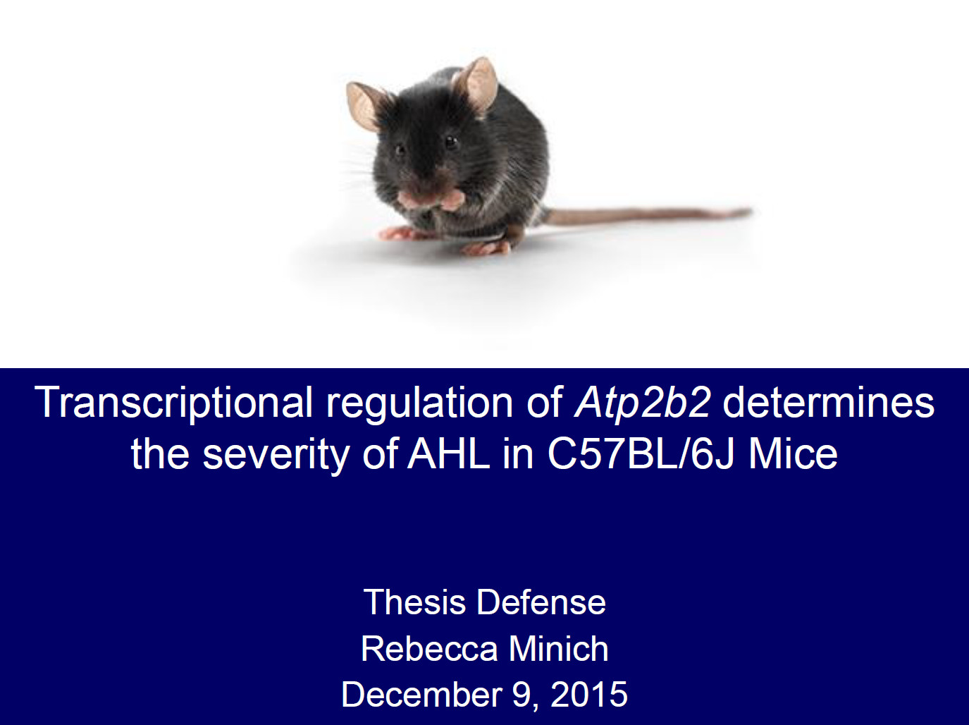 The promoter of Alpha-Atp2b2 was identified. Atp2b2 transcript is misregulated in C57BL/6J mice and long non-coding RNA is upregulated. The auditory system of normal mice is affected by  C57BL/6J Atp2b2 gene. Atp2b2 and long non-coding RNA could contribute to age related hearing loss in C57BL/6J mice.