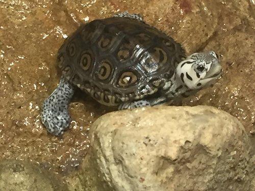 Turtle Crossing.jpeg