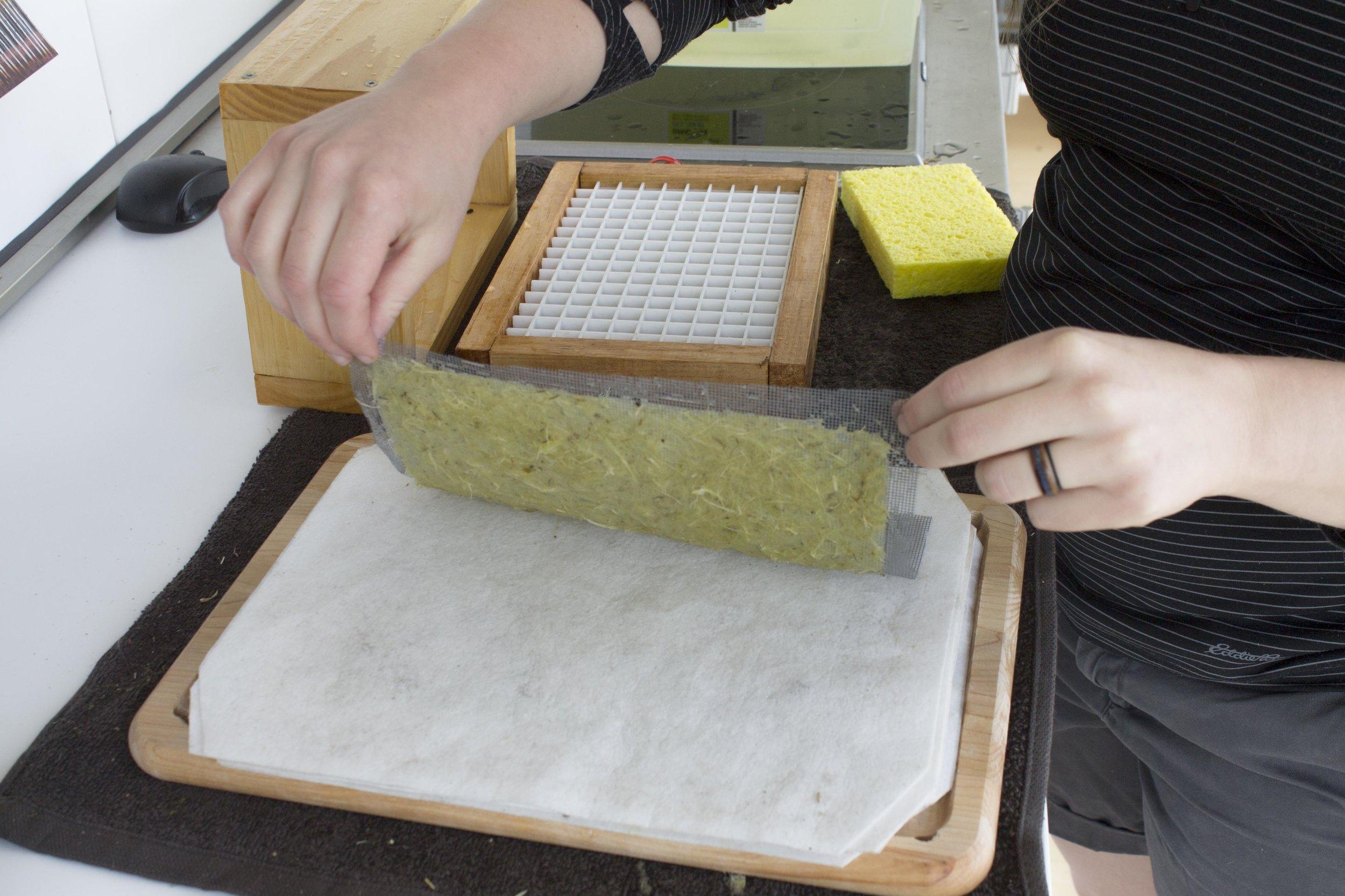 Garlic Mustard Paper.jpg