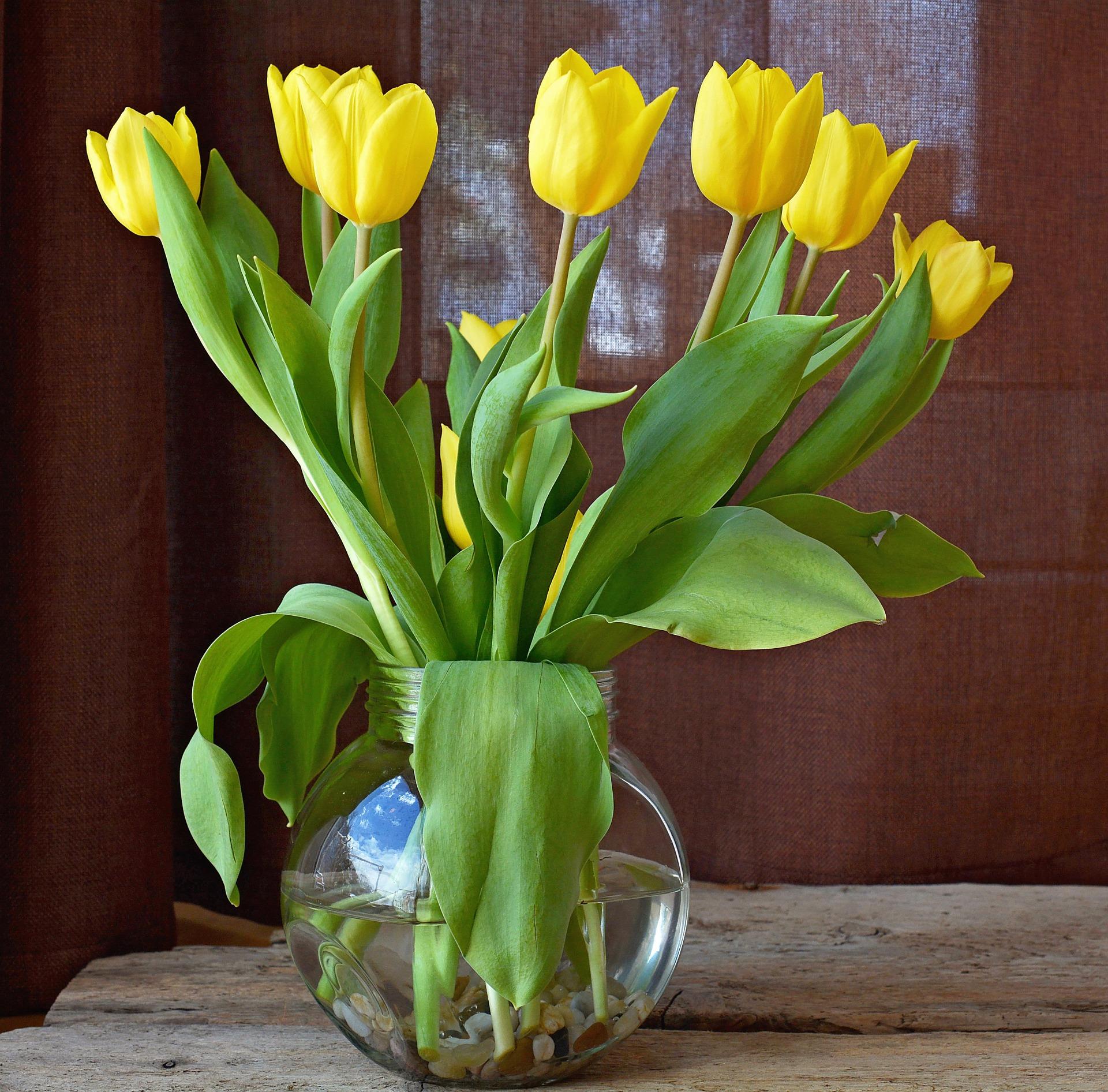 tulips-719365_1920.jpg