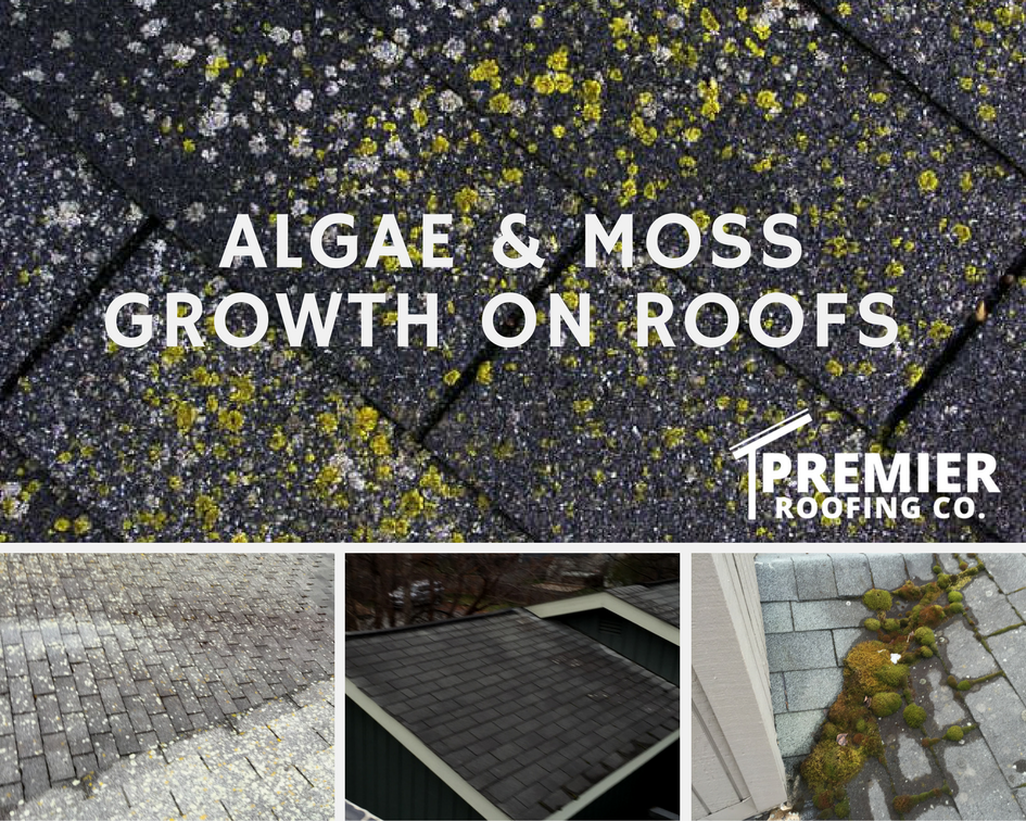 Algae & Moss Growth on Roofs in Anchorage