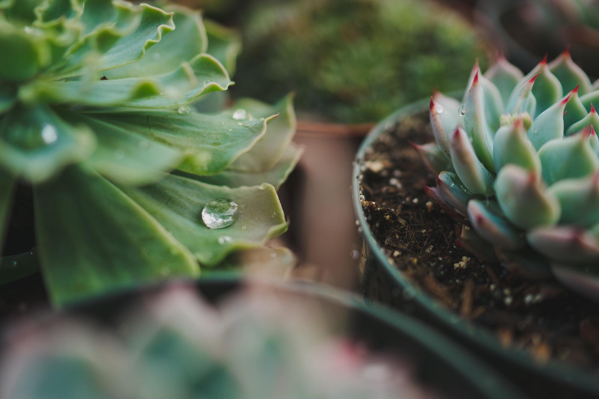 flora-grubb-2-web.jpg