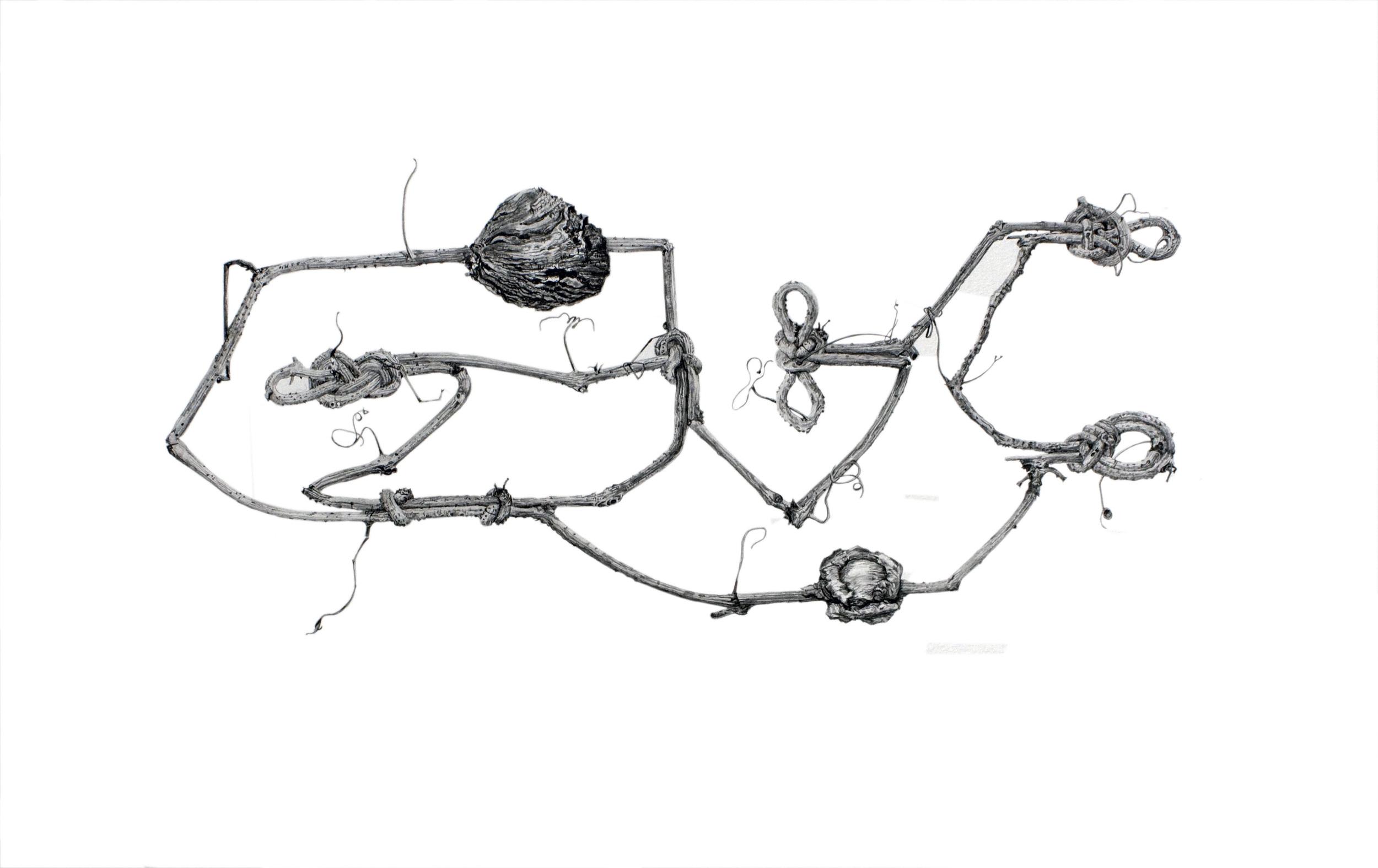 Viney Burly Sailor Knot Circuit