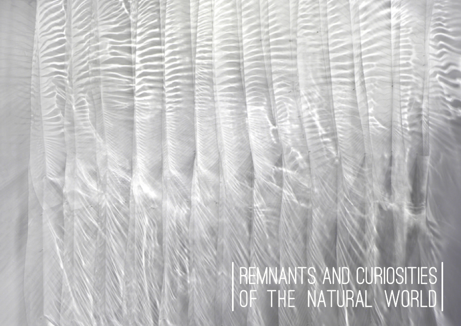 Remnants and Curiosities of the Natural World
