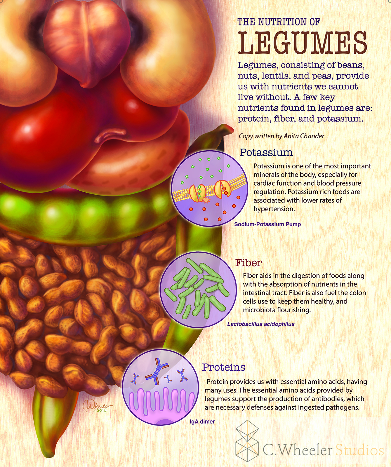 Nutrition of legumes, 2015