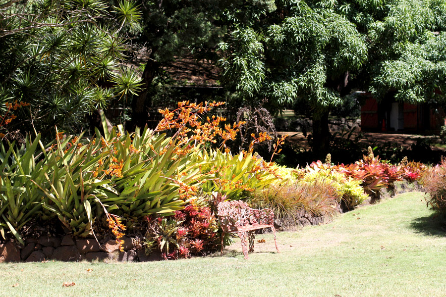 Allergen Garden Kauai, Hawaii